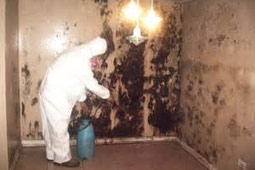 ADS_mold_IAQ_Remediation