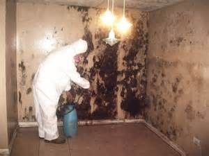 Individual in HAZMAT suit removing mold from the interior of a structure.